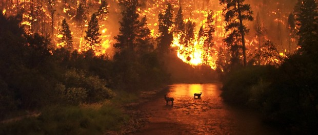 Wildfire by Science News
