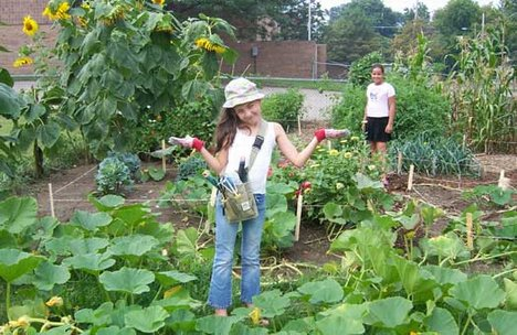 What To Do If Your Vegetable Garden Fails
