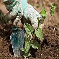 garden_gloves_200
