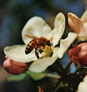 attract-bee