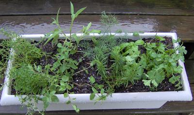 Create A Container Herb Garden