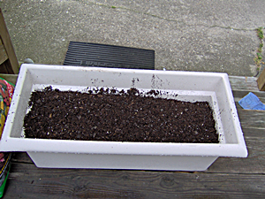Fill Container About Halfway With Potting Soil