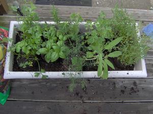 Create a Container Herb Garden Veggie Gardener