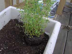 Plant Each Herb In Herb Container
