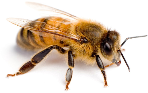 Tips for Helping To Sustain Bee Populations