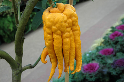 10 Strange and Unusual Fruits and Vegetables