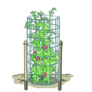 Find The Right Tomato Supports