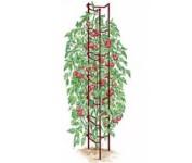 Tomato Ladder