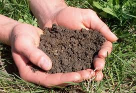 How To Perform a Soil Test
