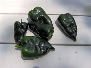 How To Air Dry Peppers