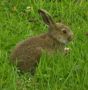 How To Deter Rabbits From the Vegetable Garden Veggie Gardener