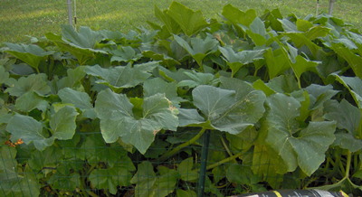 Lessons Learned From The Squash Patch
