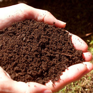 Understanding Soil Nutrients - Phosphorus