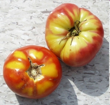 Tomato Quirks Part 3 - Green Shoulders