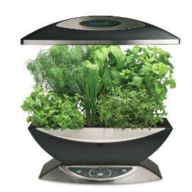 Easily Grow Fresh Herbs In The Kitchen Veggie Gardener