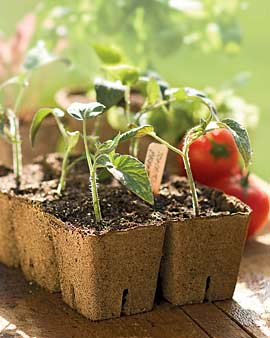 6 Great Items for Starting Vegetable Seeds Right