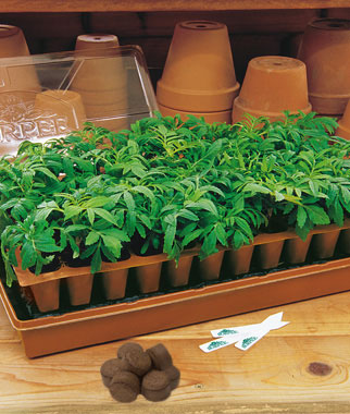 20 Easy Tips for Starting Seeds Indoors