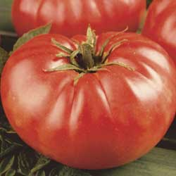 mortgage_lifter_tomato