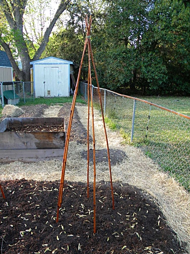 How To Build a Teepee Trellis for Pole Beans