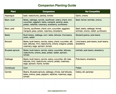 Vegetable Gardening Resources – Garden Planting Times