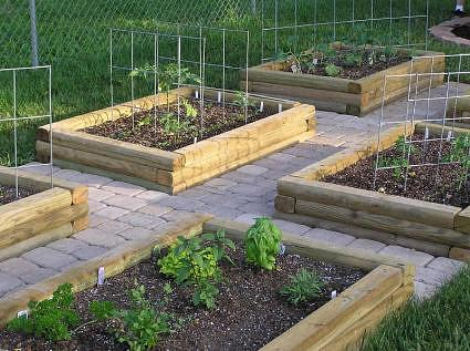 vegetable garden layout basics
