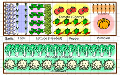 GrowVeg Vegetable Garden Plan