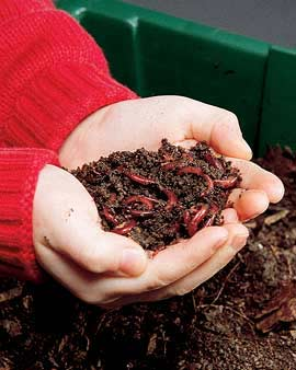 Where to Buy Worms for Composting