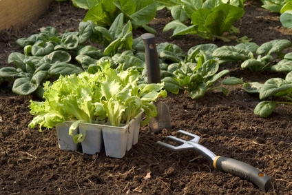 Use Succession Planting to Maximize the Vegetable Garden