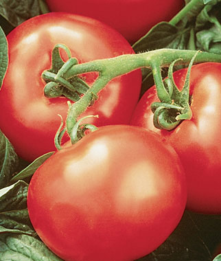 5 Great Tomatoes for Warm Climates
