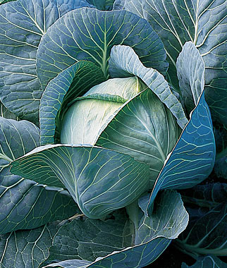 5 Vegetables That Grow Well In the Midwest