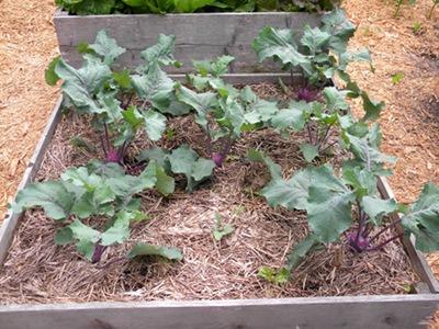 Improve Efficiency of Your Vegetable Garden