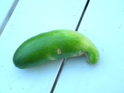 What Causes Deformed Cucumbers
