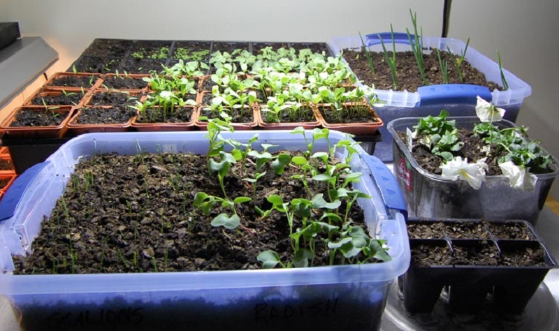 With icy weather just outside your front door, now is the time to get cranking on your indoor veggie garden.