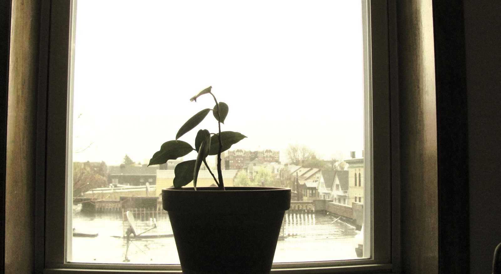 Wikibooks_planting-plant_in_window