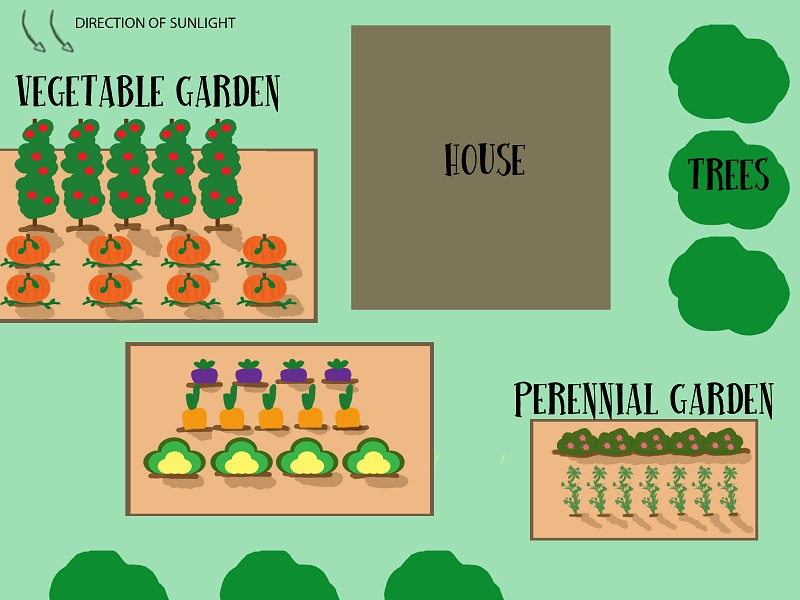 Light exposure is an important factor to consider when deciding where to plant your garden(s). Use this image and article as a guide to help you decide. Image by Lauren Thompson.