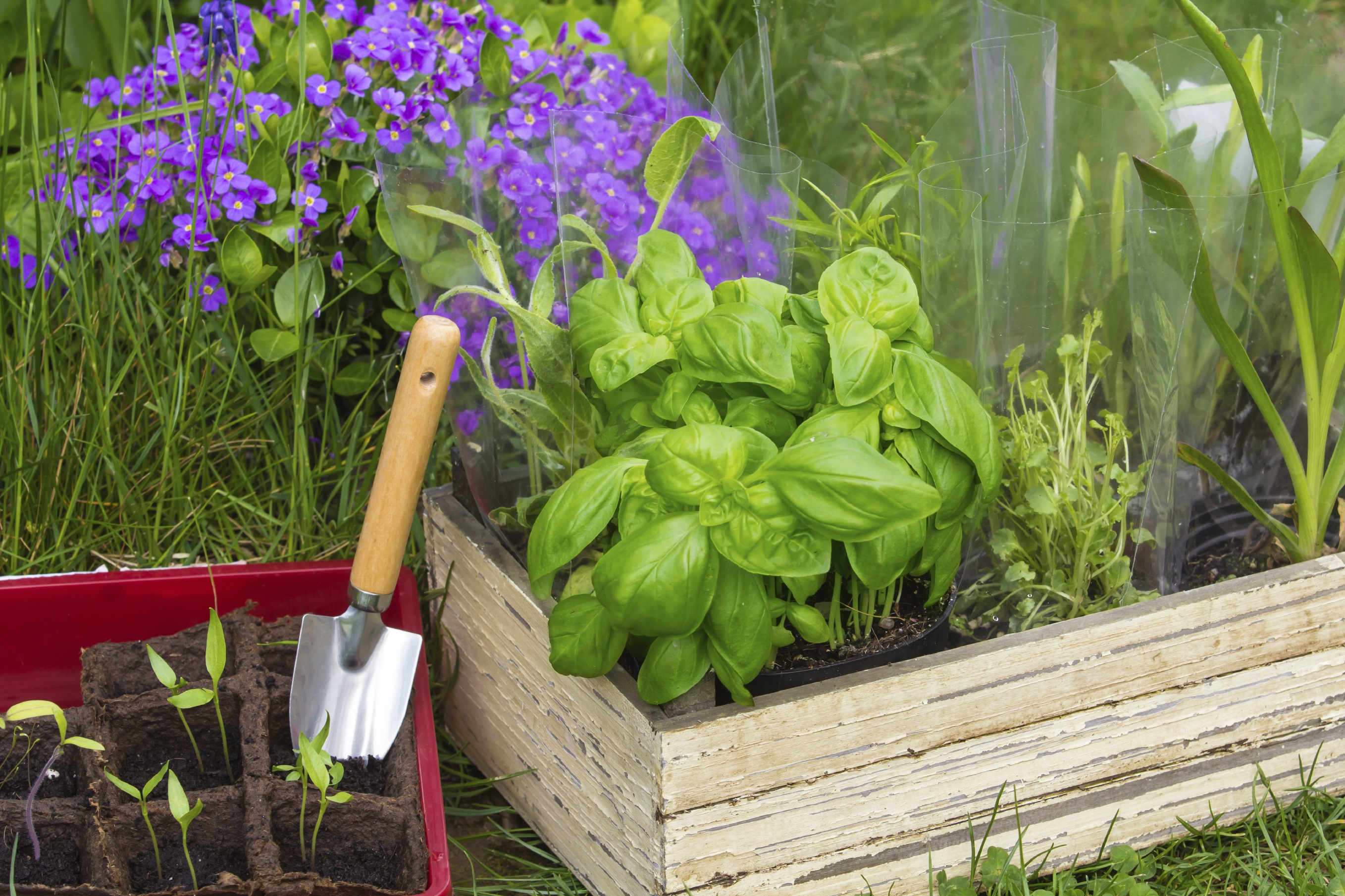 welcome to veggie gardener online and home grown