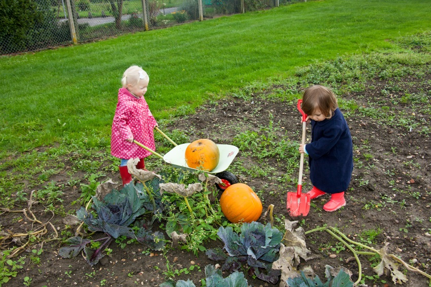 Tips For Fall Garden Preparation