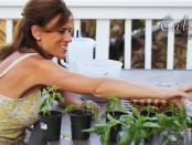 calikim-on-veggie-gardener