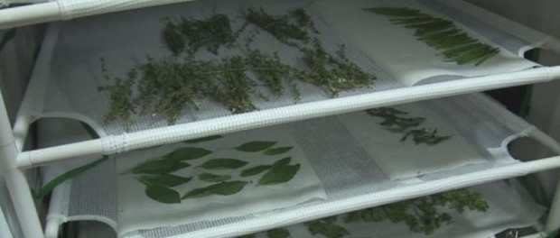 Drying Herbs by Video Jug