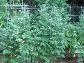 Tomato Cages by Bonnie Plants