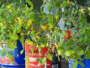 Container Gardening by Porch.com