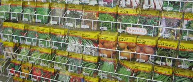 Seed Selection by Plant Fair Nursery