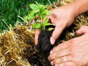 Straw Bale Gardening by Modern Farmer