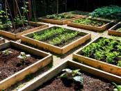 Garden Plan by Garden Dad