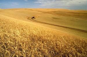 land to farm