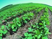 organic crop insurance