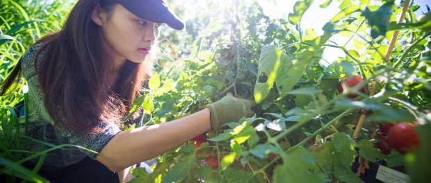 Garden Program Director Job