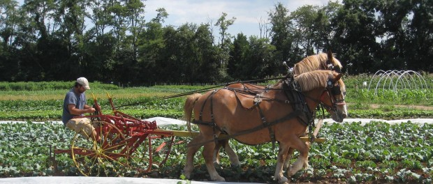 Apprenticeship at Horse Powered Vegetable Farm