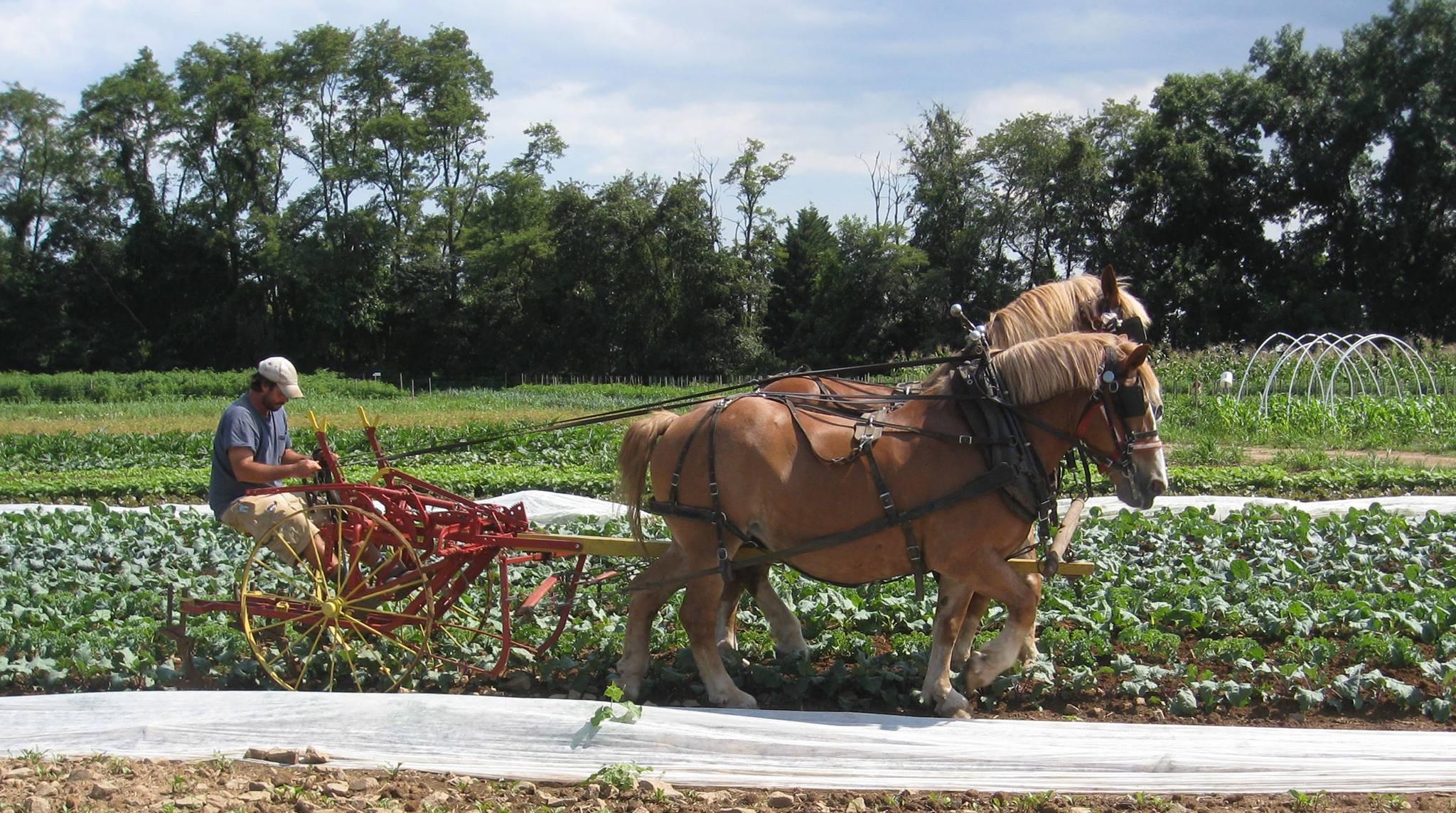 Farmer Training