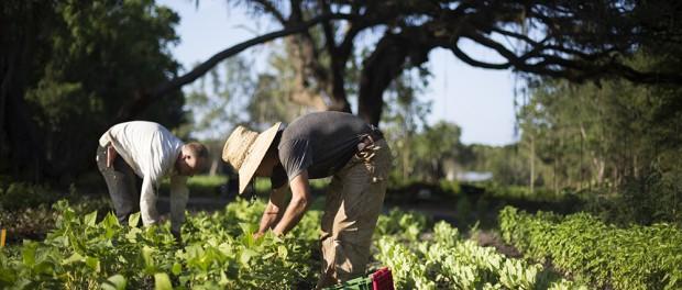 Farm Manager Job in Georgia